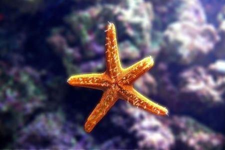 Akwarystyka morska
